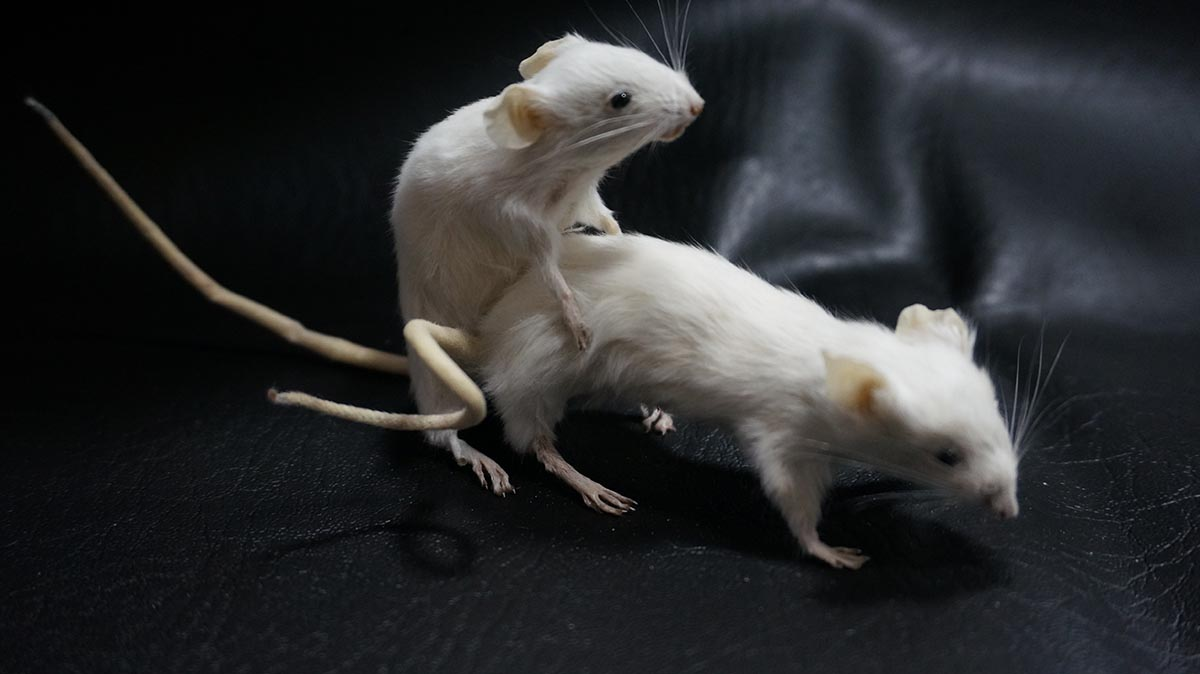 The British Academy Of Taxidermy Valentines Classes